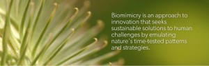 Source: Biomimicry Institute http://biomimicry.org/